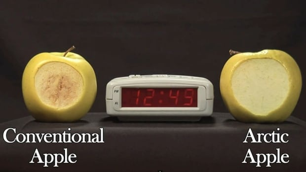 The Arctic Apple on the right, does not brown like the conventional apple on the left, because the genes which produce polyphenol oxidase have been silenced, meaning the chemical reaction that leads to browning does not take place.