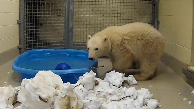 new bear cub