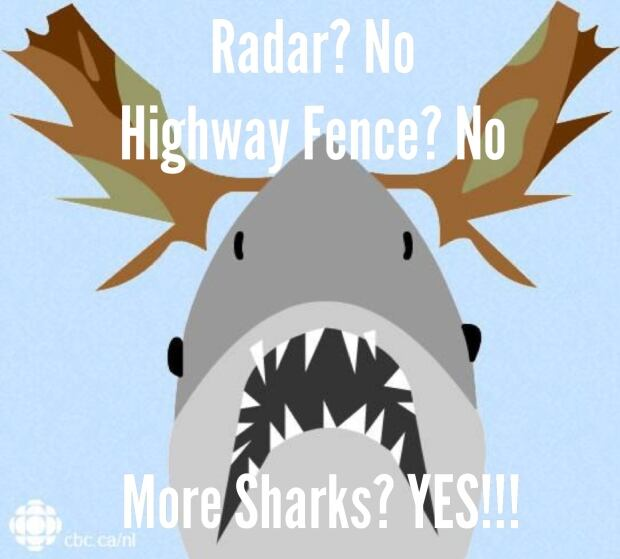 Radar? No. Sharks? Yes