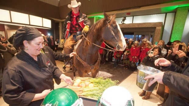 Calgary's Cain Quam leads 'Justin' the horse to some carrots and beer at the Ramada hotel during Grey Cup festivities in Regina.