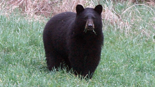 """Mike Commito wrote """"The Role of Place and Local Knowledge in Ontario's Spring Bear Hunt Debate: Fifteen Years Later."""""""