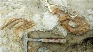 Dinosaur tools