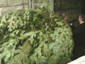 Christmas tree - B.C. legislature rotunda mixup