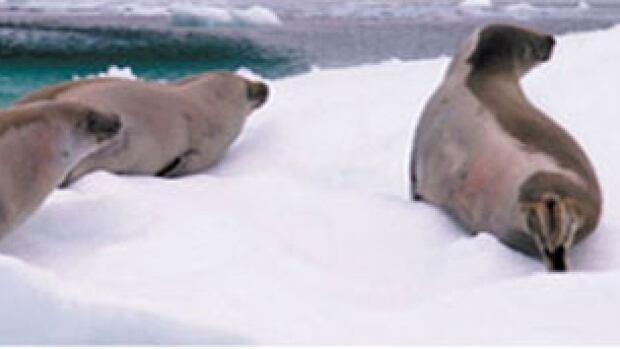 nl seals