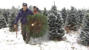 P.E.I. Christmas trees