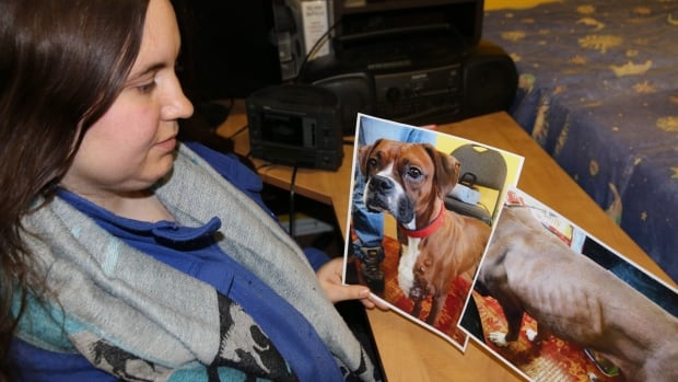 Jessica Rendell, president of the Heavenly Creatures animal rescue group in St. John's, holds photos of an emaciated boxer named Bella who was rescued by the group last year.