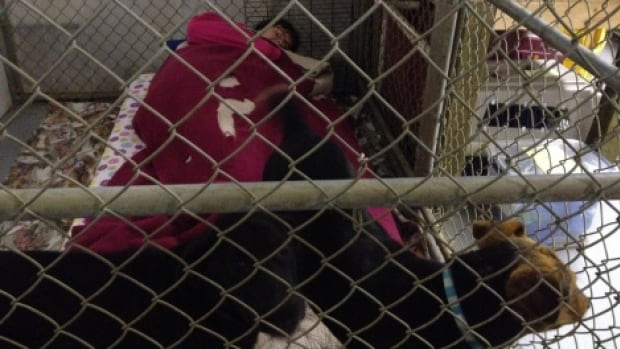 Jillian Doucet, president of the Meadow Lake Humane Society, is sleeping at the shelter until she raises $5,000.