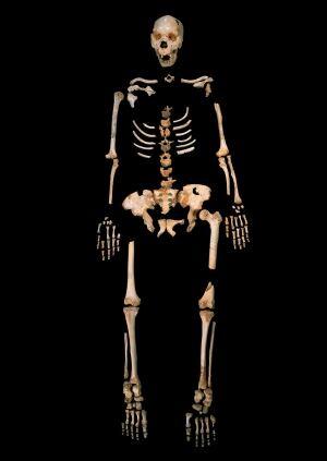 Human Ancestor DNA