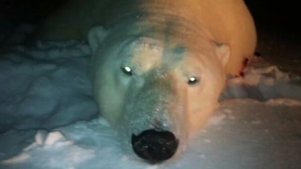 "Environment Minister Leona Aglukkaq posted a photo of a freshly killed polar bear on Twitter with the caption: ""Enjoy!!"""