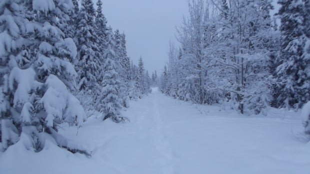 Heavy snowfall in the southern Yukon over the past month has made bush travel in the territory nearly impossible.