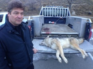 Coyote killed by conservation officer in Summerland