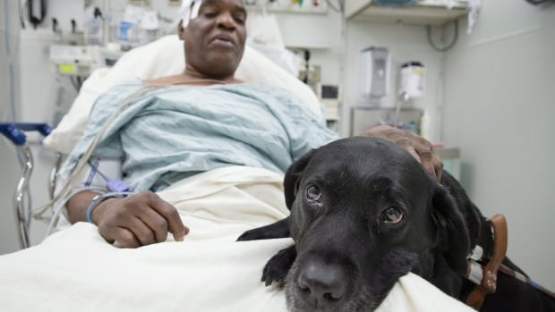 Cecil Williams, 61, fainted and fell onto a Manhattan subway track. His black Labrador, Orlando, tried to save him from falling. Both escaped without serious injury.