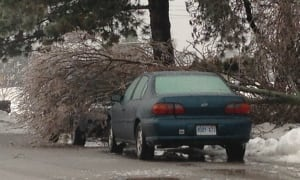 Fallen tree on car in Hamilton ice storm