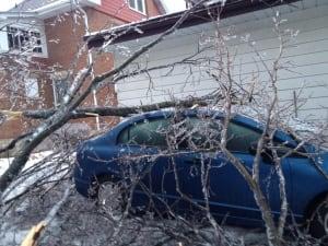 Tree on blue car