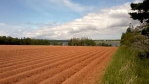 P.E.I.'s Agricultural Crop Rotation Act came into effect in 2001.