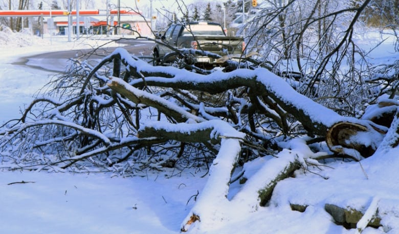 Ice storm effects linger as tens of thousands still in dark | CBC News