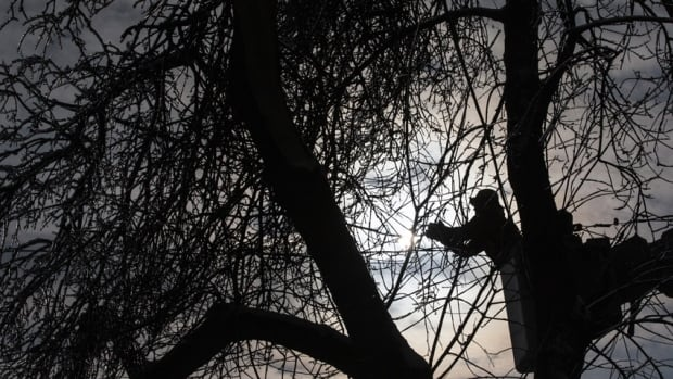 Toronto Hydro expects to have all power that was out from last week's brutal ice storm restored today.