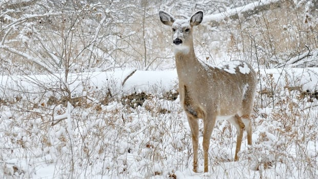 Two Windsor residents pleaded guilty and were fined a total of $2,000 for their involvement in an illegal deer hunt.