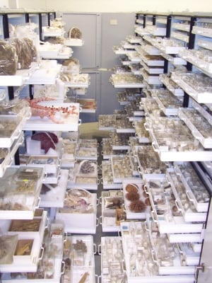Specimen drawers