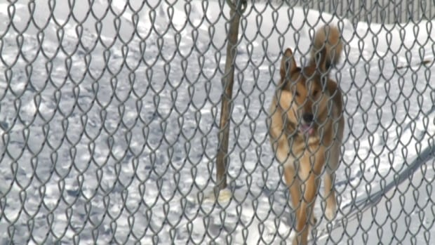 A committee of council wants to limit the length of time a dogs can be tethered outside in Windsor.