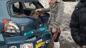 A motorist comforts her dog after the crash on the Saint John Habour Bridge Jan. 6, 2013