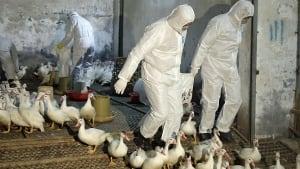 H7N9 bird flu poultry market