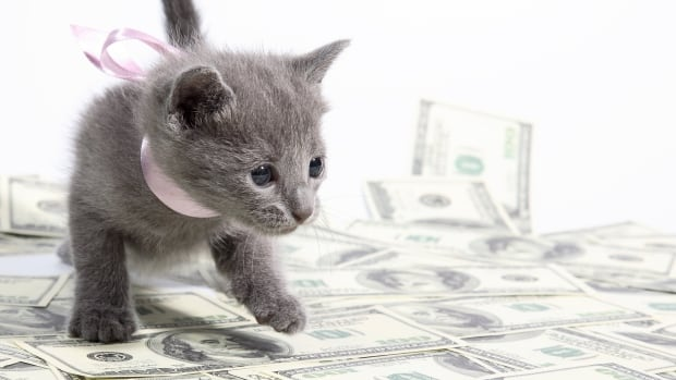 Research at Georgia Tech shows certain words do better in crowdfunding campaigns. Pitches with the word 'cats' tend to do well.