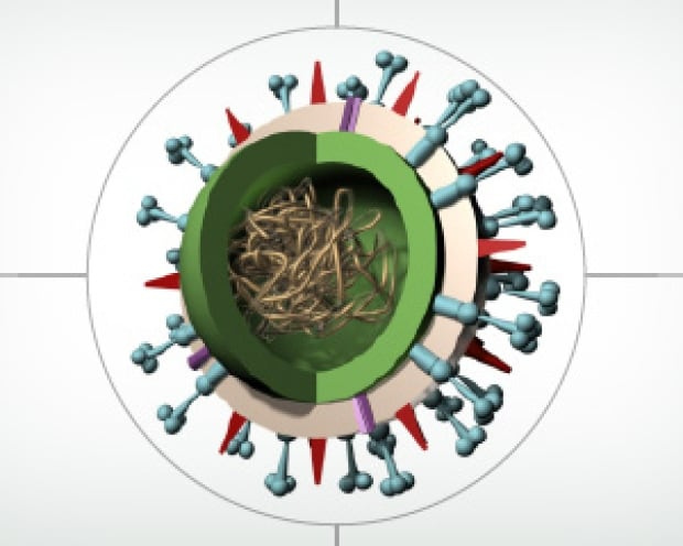 Flu virus diagram