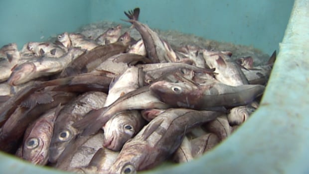 Fisheries and Oceans Canada has increased the 2014 quota for haddock by 250 per cent, to 16,470 metric tons.