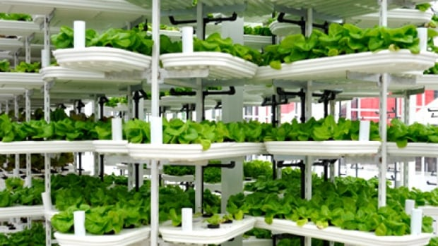 North America's first VertiCrop farm was built on the roof of a parkade in downtown Vancouver in November 2013.