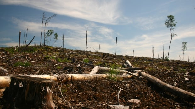 More clearcut logging of the one-million hectare Whiskey Jack Forest is in the works.  The Whiskey Jack Forest is part of Grassy Narrows First Nation's traditional territory.
