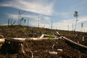 Clearcut logging on Grassy Narrows traditional territory