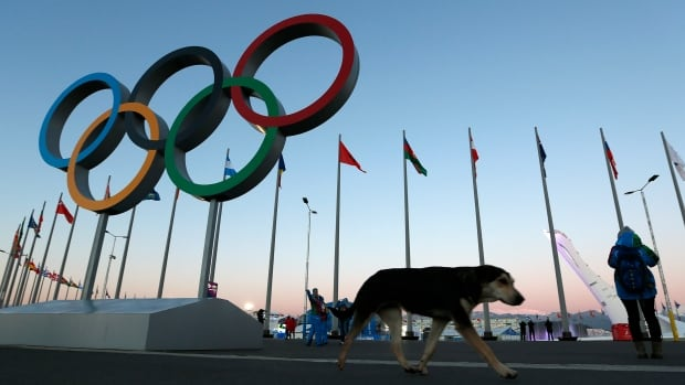 A stray dog walks past the Olympic Rings in Olympic Park, three days before the start of the 2014 Winter Olympics in Sochi, Russia. A pest control company which has been killing stray dogs in Sochi for years told The Associated Press on Monday that it has a contract to exterminate more of the animals throughout the Olympics.