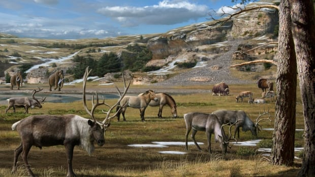Huge mammals including mammoth, horse, reindeer, bison and musk ox roamed the Arctic during the Ice Age.