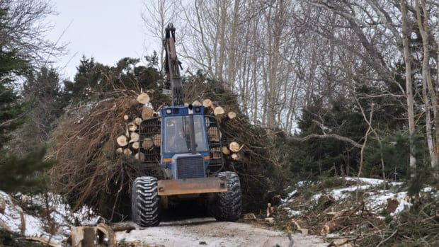 Trees are being cleared from the old rail bed east of Charlottetown as part of work to complete the P.E.I. portion  of the Trans Canada Trail.