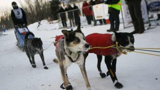 Matt Hall, the third musher to cross the finish line in the 2014 Yukon Quest sled dog race, has registered for 2015.
