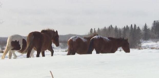 sk-pic-wild-horses2