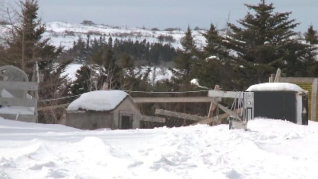 A farm owner in Winterland was charged with cruelty as well as other charges under the Animal Protection Act, following an investigation into dead animals on his property.