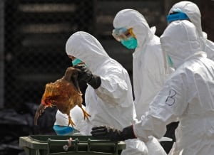 Hong Kong China Bird Flu