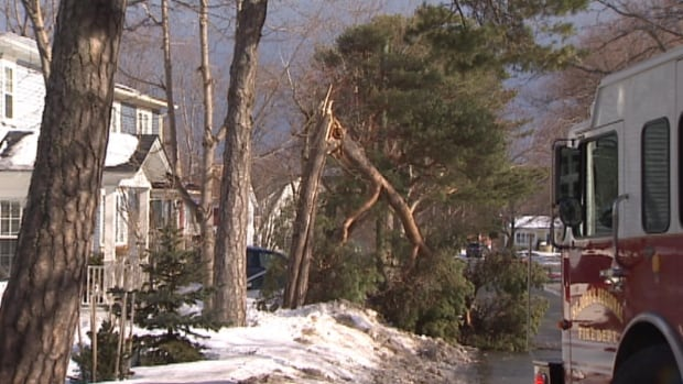 Crews in St. John's worked to clear away a tree that was blown down in the gusting winds on Saturday morning.