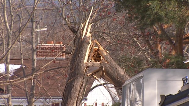 High winds over the weekend tore off siding, brought down traffic lights and cracked trees like this one in St. John's.