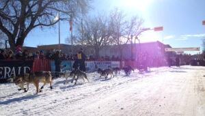 skpic dog sled race