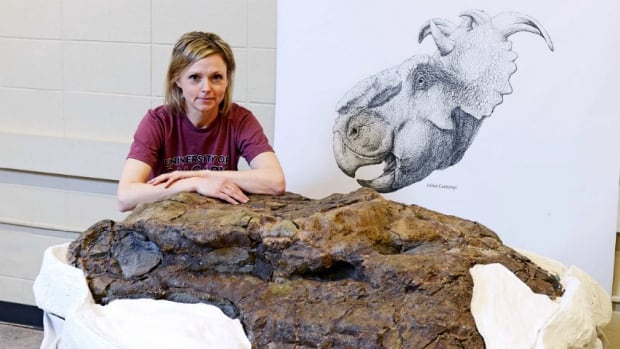 Palaeontologist Darla Zelenitsky and her team found the skull of a pachyrhinosaur last October.