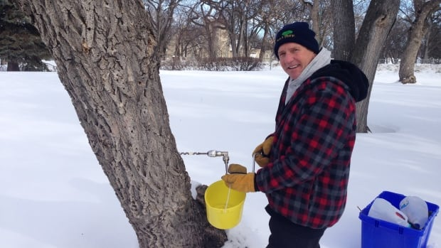 Ken Fosty taps a maple tree