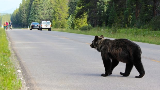 Parks Canada will begin a mandatory seasonal overnight travel restriction on the Bow Valley Parkway starting March 1.