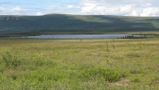 Evidence from the sea floor suggests that parts of Beringia were once shrub tundra with edible plants and animals, similar to this landscape in modern-day Alaska.