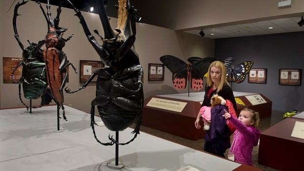 Brooklyn Jimmo from New Glasgow and her aunt Melissa Jimmo view the larger-than-life bug exhibit at the Museum of Natural History in Halifax on Feb. 25. Halifax is the first Canadian stop for Bugs: Outside The Box, created by Italian sculptor Lorenzo Possenti.