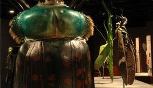 giant bugs exhibit