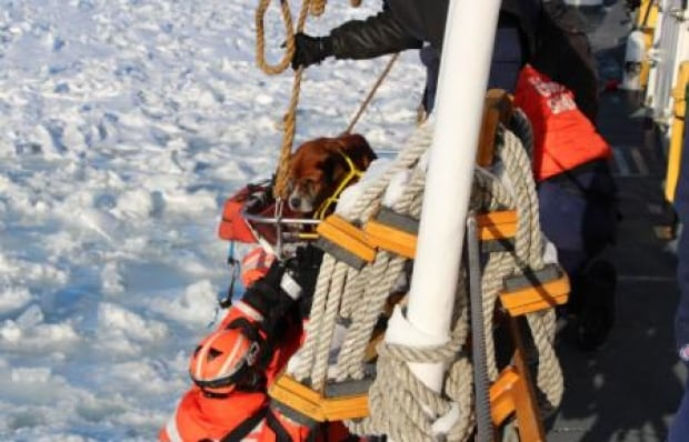 U.S. Coast Guard Dog Rescue Two