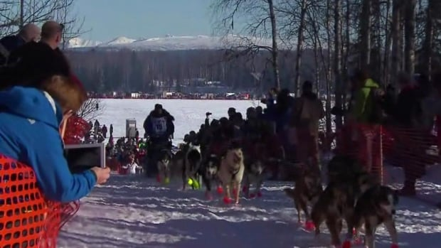 Almost 70 dogteams started in this year's Iditarod compared to 18 in the Yukon Quest.